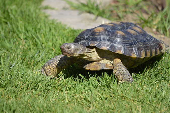 Slow and Steady Wins the Content Marketing Race
